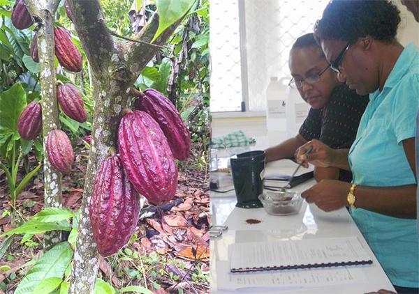 cocoa-PHAMA-Action